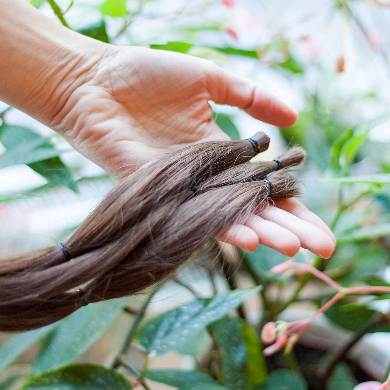 3 Echthaarzöpfe als Haarspende an Capilli Haarwerkstatt Dresden